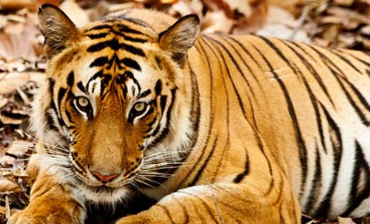 bandhavgarh-national-park1