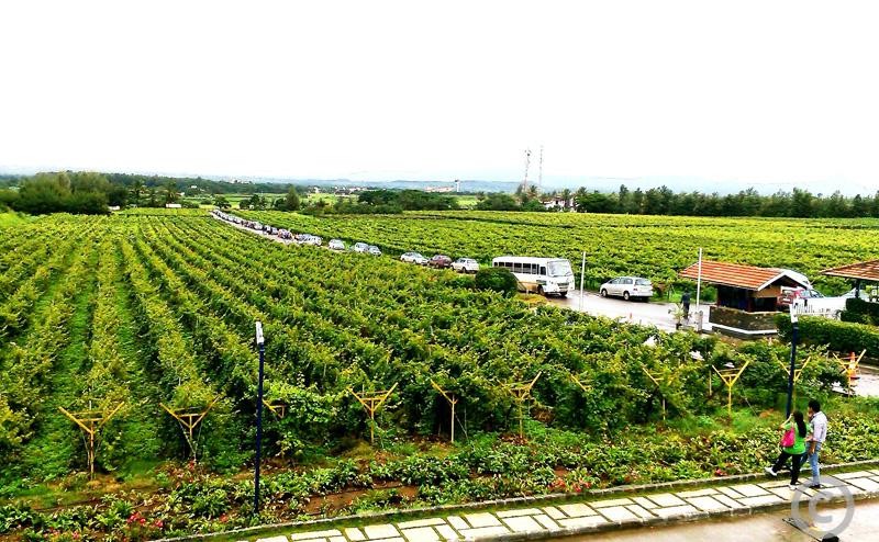 sula vineyards nasik